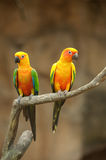 Two beautiful parrots Stock Photo