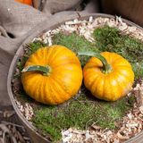 Two beautiful pumpkins Stock Images