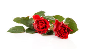 Two Beautiful red roses Royalty Free Stock Images