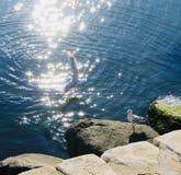 seagulls on the shore of Caspian sea royalty free stock photos