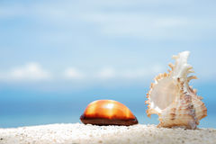 Two beautiful seashells on the white sand of tropical sea beach at sunny day with turquoise water background Royalty Free Stock Photo