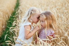 Two beautiful sisters on a wheat field. Two little girls with white hair whispering on the plait of wheat Stock Photos