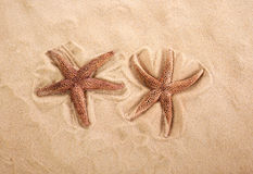 Two beautiful starfish on bright sand. Closeup of some starfishes on the sand of a beach Royalty Free Stock Images
