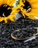 Two beautiful sunflowers, black seeds and a wooden spoon Stock Photos