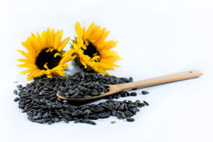 Two beautiful sunflowers and black seeds with a wooden spoon Royalty Free Stock Image