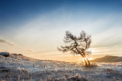 Two beautiful trees in the mountains at sunset Royalty Free Stock Image