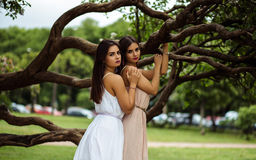 Two beautiful twins young women in summer dresses near blooming lilac Stock Photo