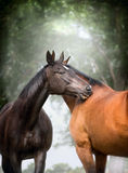 Two  beautiful warm-blood dressage horses scratching each over big tree nature background Royalty Free Stock Photo