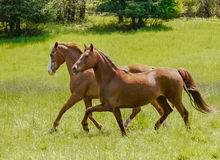 Free Two Beauty S Out For A Spring Trot Stock Photography - 78375412