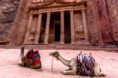 Two bedouin camels in front of Al-Khazneh `The Treasury`. One of the most elaborate temples in the ancient Arab Nabatean Kingdom city of Petra Stock Photos