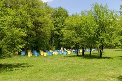 Two bee-masters  in veil at apiary work among hives. Zavet, Bulgaria Stock Photography