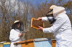 Two beekeepers in apiary Royalty Free Stock Photos