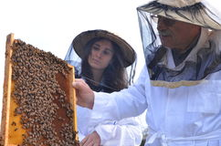Two beekeepers in apiary Royalty Free Stock Images