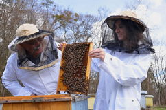 Two beekeepers in apiary Stock Images