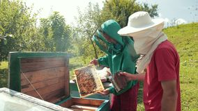 Two beekeepers in green and red special attire, collecting honey. Apiculture, frames beehive, two beekeepers in green and red special attire, collecting honey stock footage