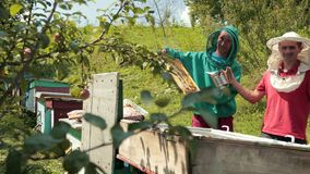 Two beekeepers in green and red special attire, collecting honey. Beekeeping, frames beehive, two beekeepers in green and red special attire, collecting honey stock footage