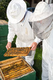 Two beekeepers maintaining bee hive Stock Photography