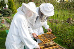 Two beekeepers maintaining bee hive Royalty Free Stock Image