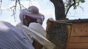 Two beekeepers at work. Summer time 4K. Two beekeepers working with frame to produce honey stock video footage