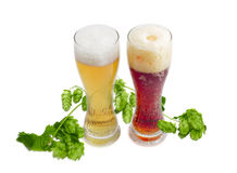 Two beer glass of various beer and branch of hops Royalty Free Stock Images