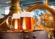 Two beer glasses in the brewery. Two glasses of beer in the brewery Royalty Free Stock Image