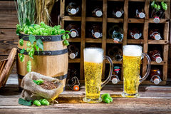 Two beer straight from the bottle aged in the cellar Royalty Free Stock Photography