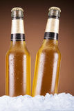 Two beers Stock Images
