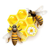 Two bees. And honeycombs isolated on white stock illustration