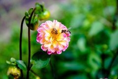 Two bees Stock Photo