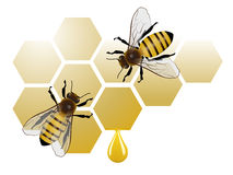 Two bees on honeycomb with honey Royalty Free Stock Photo