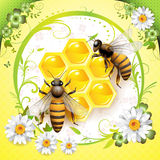 Two bees and honeycombs. Isolated over springtime background Stock Image