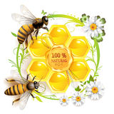 Two bees and honeycombs Stock Image