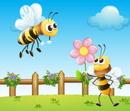 Two bees inside the wooden fence Royalty Free Stock Photo