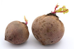 Two beets Stock Photography