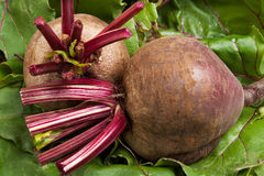 Two beets on leaves Royalty Free Stock Photo