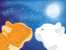 Two beloved cats on the night sky background. Royalty Free Stock Images
