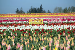 Two Bences with Tulips Stock Images