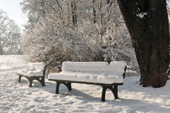 Two benches covered with snow. Two lonely benches covered with snow in the sunlight Royalty Free Stock Images
