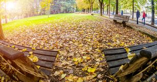 Two benches covered with yellow leaves in autumn Park. Toning Royalty Free Stock Images
