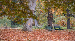 Two benches in the park in fall. With red foliage Royalty Free Stock Photos