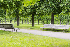 Two benches in the Park. The old benches the Park is in the summer garden Royalty Free Stock Image