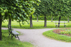 Two benches in the Park. The old benches the Park is in the summer garden Stock Photos