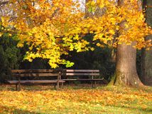 Two benches in the park Stock Images
