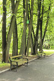 Two benches under the trees Royalty Free Stock Images