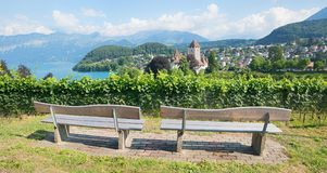 Two benches at vineyard hill spiez town. breathtaking view to th Stock Images