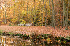 Two benches at waterside in autumn, Netherlands Stock Images
