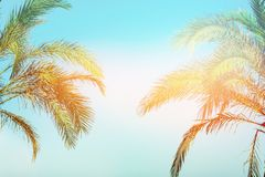 Two bending palm trees on toned vanilla pink peachy sky golden sun flare. Frame border composition. Tropical nature background royalty free stock photos