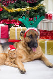 Two best friends dog and cat in Christmas night. Dog and cat in Christmas night Royalty Free Stock Photos