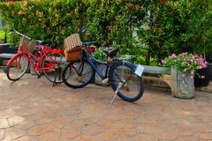 2 Vintage style bicycles in garden. Classic, vintage, flower, nature, cute Royalty Free Stock Photos
