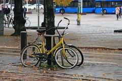 Two bicycles parked by the tree. On a rainy autumn afternoon Royalty Free Stock Photos